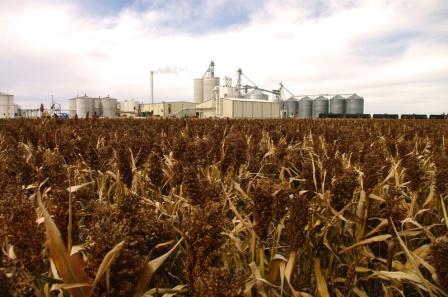 A sorghum field in Kansas (source: http://www.kssorghum.com/wp-content/uploads/2011/09/landscape.jpg)